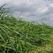 Düngeverordnung: Die Stickstoff-Effizienz im Blick haben - Eine Grünlandanalyse lohnt sich