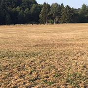 Trockenheit: Futtergrundlage in Gefahr - Das Grünland in Schwung bringen