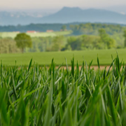 Ökolandbau vs. konventioneller Anbau: Ist Bio wirklich nachhaltiger?