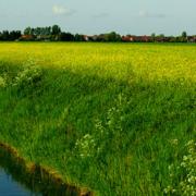 Phosphatbelastung von Fließgewässern – Neue Erkenntnisse zeigen: Landwirtschaft hat nur einen geringen Anteil