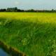 Phosphatbelastung von Fließgewässern - Neue Erkenntnisse zeigen: Landwirtschaft hat nur einen geringen Anteil