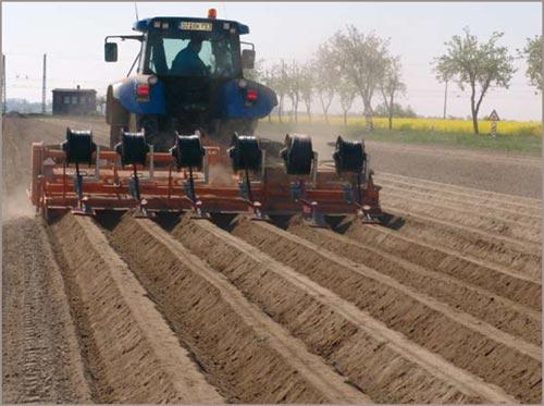 Tropfschlauchverlegung beim Häufeln der Kartoffeldämme