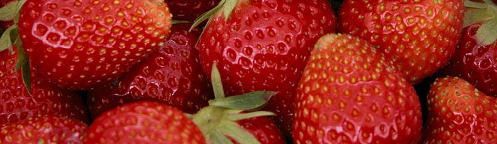 Erdbeeren Düngung
