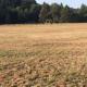 Das Grünland in Schwung bringen