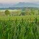 Ist Bio wirklich nachhaltiger?