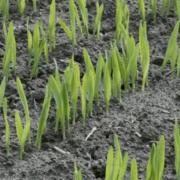 Mikronährstoffe für starke Pflanzen