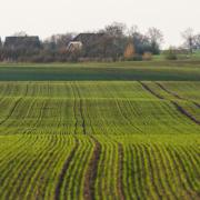 Trockenheit: Mangelnde Nährstoffversorgung ausgleichen - Getreide für den Winter stärken
