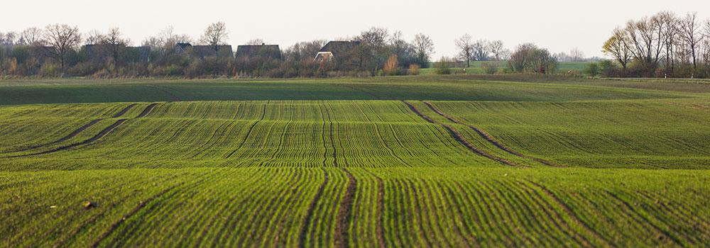 Getreide für den Winter stärken