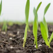 Die Umwelt schonen - Mit welchem Dünger lassen sich Ammoniakverluste reduzieren?