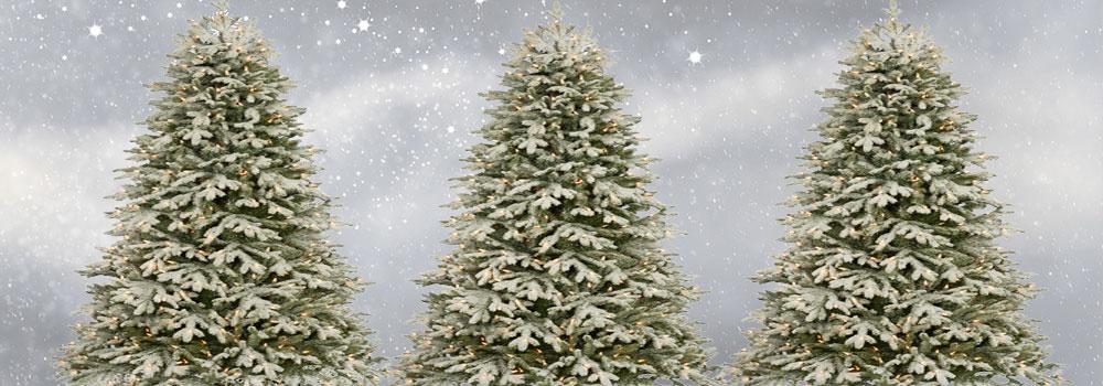 Weihnachtsbaumarten im Vergleich