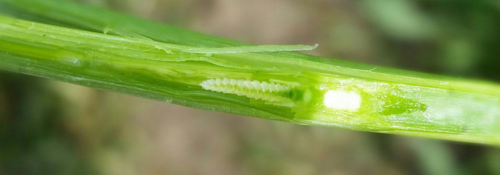 Calciumbedarf von Feldkulturen und von Grünland