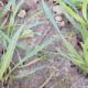 Mikronährstoffe: Kleine Mengen, große Wirkung