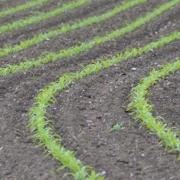 Unterfußdüngung im Mais - Die Nährstoffe gleichmäßig platzieren