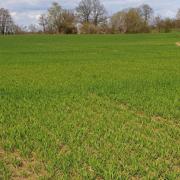 Trockene Böden in vielen Regionen Deutschlands - Jetzt die Getreidebestände mit Nährstoffen versorgen