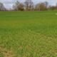 Jetzt die Getreidebestände mit Nährstoffen versorgen