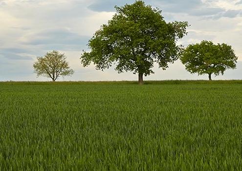 Nitrat-Auswaschungen im Frühjahr
