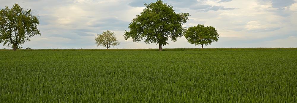 Nitrat-Auswaschungen im Frühjahr - Macht es einen Unterschied, ob ich Harnstoff mit Ureasehemmern oder Nitrat dünge?