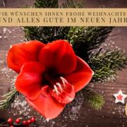 Amaryllis - Winterlicher Farbtupfer fürs Wohnzimmer