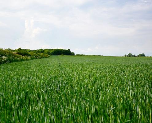 Mikronaehrstoffe fuer Getreidepflanzen