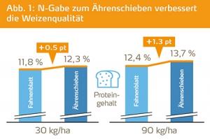 N-Gabe zum Aehrenschieben verbessert die Weizenqualitaet