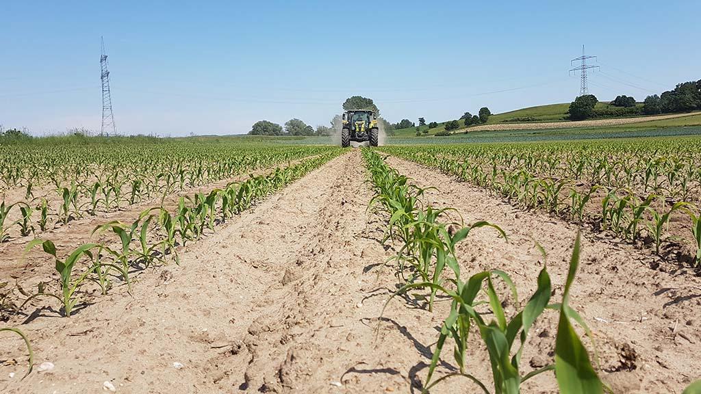 Nachdüngung von Mais mit Nitrat und Sulfat