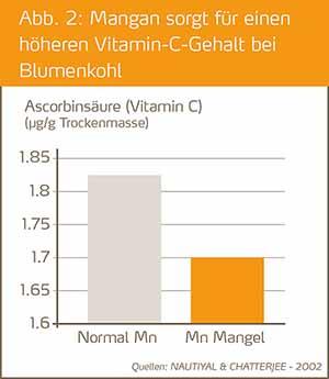 Mangan sorgt fuer einen hoeheren Vitamin-C-Gehalt bie Blumenkohl