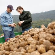 Mikronaehrstoffduengung von Kartoffeln