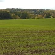 blattduengung-mikronaehrstoffe-getreide-herbst