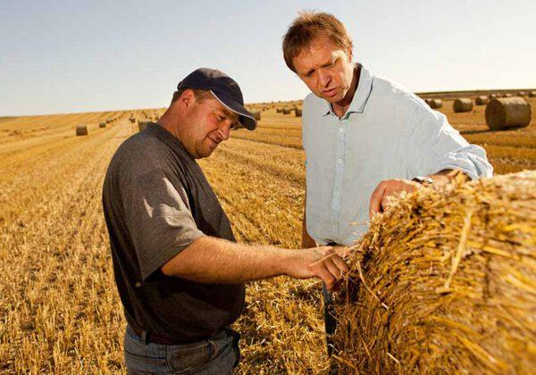 Getreidestroh: Mehr als ein Verkaufsprodukt?