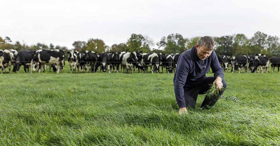 Weide mit Kühen und Landwirt